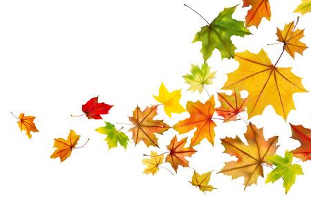 Ahorn Herbst fallenden Blätter Illustration. Standard-Bild - 31397262