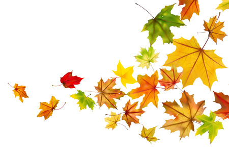 Maple autumn falling leaves illustration. Vector