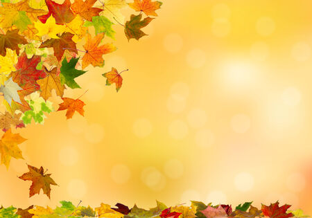 brown background: Autumn maple leaves falling down on natural background.