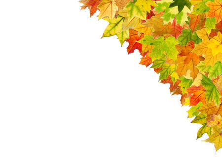 withering: Beautiful autumn frame isolated in white background.
