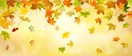 falling leaves: Panoramic view of autumn maple leaves falling down on natural background. Stock Photo
