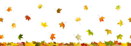 Panoramic seamless pattern of autumn maple leaves falling down on whitel background. photo