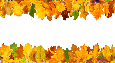 forest background: Seamless autumn oak leaves frame, isolated on white.