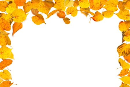 withering: Autumn falling leaves border, on white background.