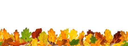 withering: Seamless pattern of oak autumn leaves, lying on the ground.