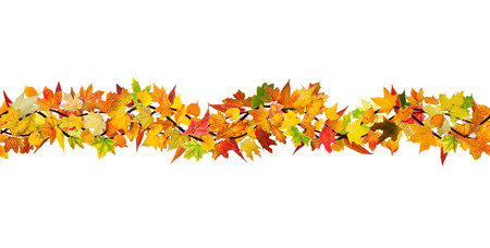 withering: Horizontal seamless pattern of autumn various types of leaves on white background. Stock Photo