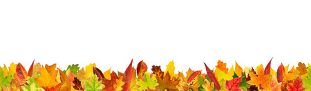 panoramic nature: Seamless pattern of autumn different kinds of leaves, isolated on white background.