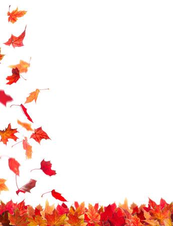 落下秋赤いカエデの葉、白い背景で隔離。