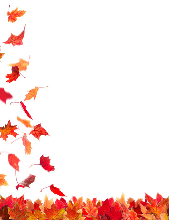 Falling autumn red maple leaves, isolated on white background.