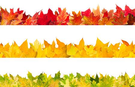 accion de gracias: Modelo inconsútil de los colores del otoño las hojas de arce, aislados en fondo blanco. Foto de archivo