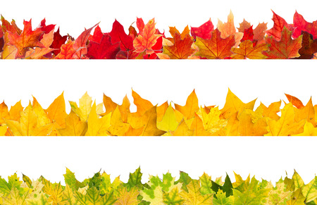 design borders: Seamless pattern of colored autumn maple leaves, isolated on white background.