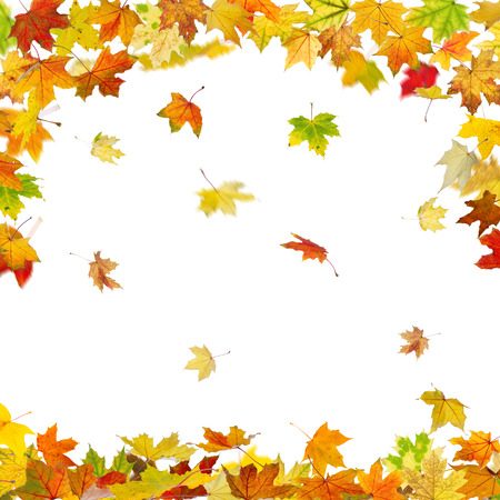 freefall: Falling autumn maple leaves isolated on white background. Stock Photo