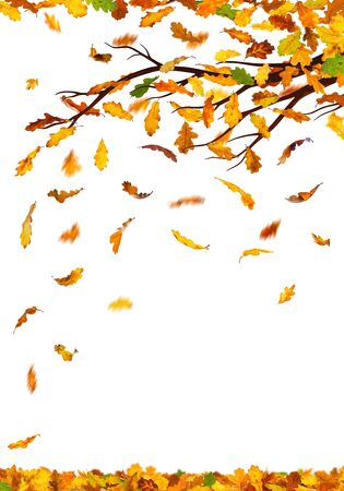 leaves falling: Branch with autumn oak leaves falling down, isolated on white background.
