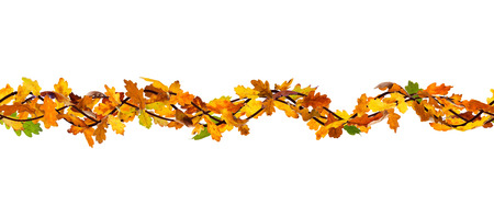 withering: Horizontal seamless pattern of autumn oak leaves on white background. Stock Photo