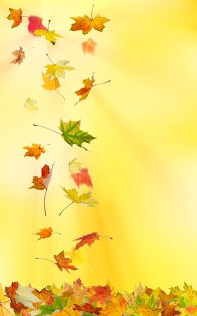freefall: Autumn maple leaves falling down on natural background.