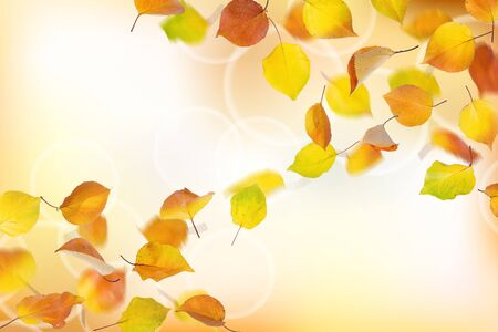 Background from falling autumn apricot leaves. Stock Photo