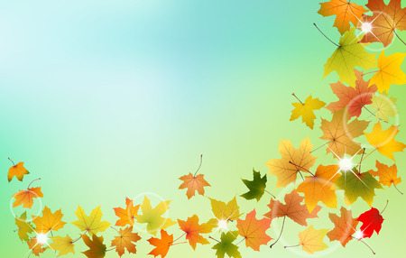 autumn leaves falling: Maple autumn leaves falling down on natural background, vector illustration. Illustration