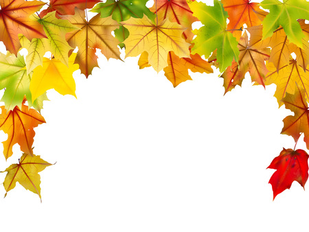 graphic background: Maple falling autumn leaves border, on white, vector illustration.