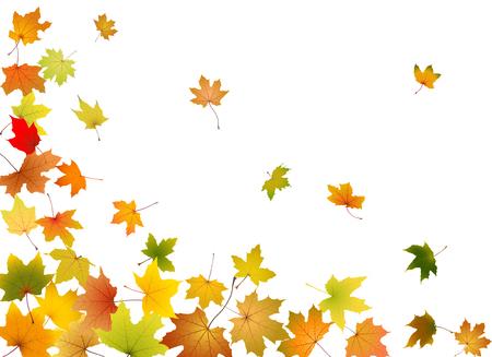 Hojas de otoño de arce que caen, ilustración vectorial. Vectores