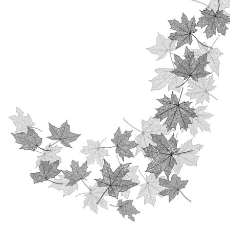 falling leaves: Dry autumn maple leaves silhouettes background, vector illustration.