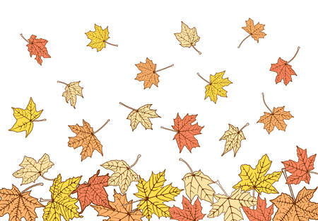 withering: Falling autumn maple color leaves, vector illustration. Illustration