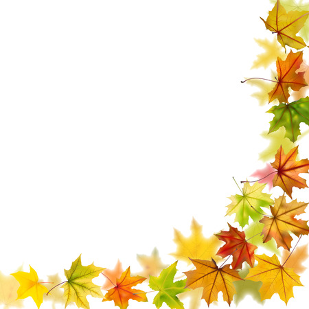 autumn arrangement: Maple autumn falling leaves, vector illustration.
