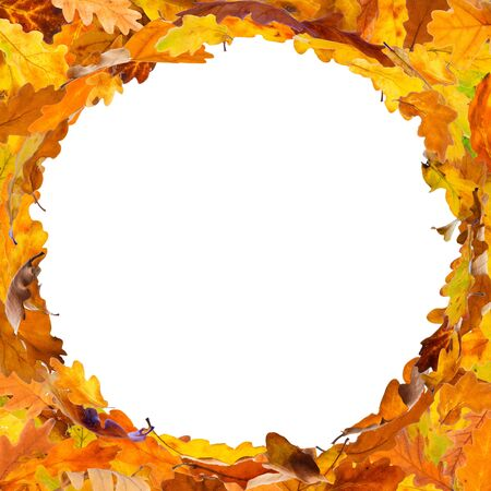 Autumn oak leaves frame in circle shape, isolated on white background.