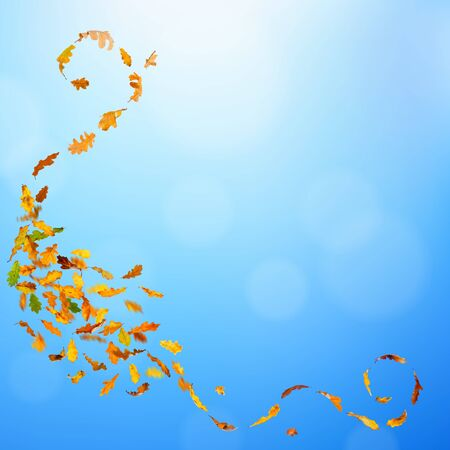 Autumn oak leaves falling down on natural background. Stock Photo