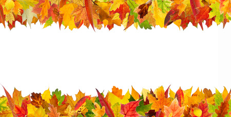 Colorful autumn different leaves frame, isolated on white background. Stock Photo