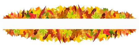 panoramic nature: Colorful autumn leaves frame, isolated on white background. Stock Photo