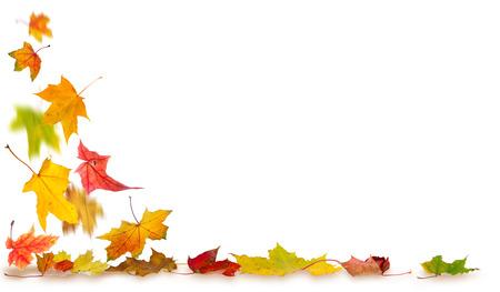 Maple herfstbladeren met schaduwen die op de grond vallen, op een witte achtergrond.