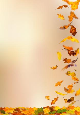 verticales: La caída de las hojas del roble de color de otoño aislados en el fondo natural. Foto de archivo