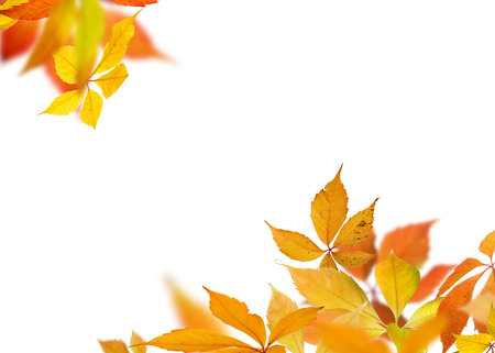 Autumn background with colorful leaves. Stock Photo
