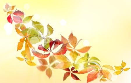 Falling Virginia Creeper(Parthenocissus quincquefolia) autumn leaves on natural background.
