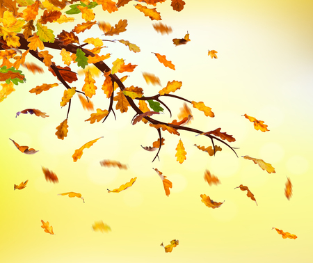 Branch with autumn oak leaves falling down on natural background.