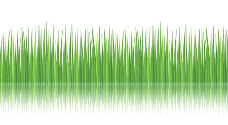 grassy field: High quality textured green grass with reflection.