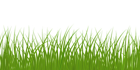 fields  grass: High quality green grass on white background, seamless vector illustration. Illustration