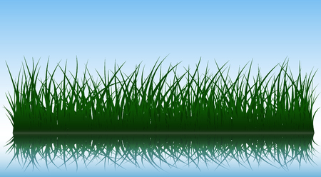 grass blades: Green grass silhouettes with reflection on water surface, vector illustration. Illustration
