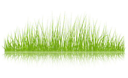 High quality green grass with reflection, vector illustration. Illustration
