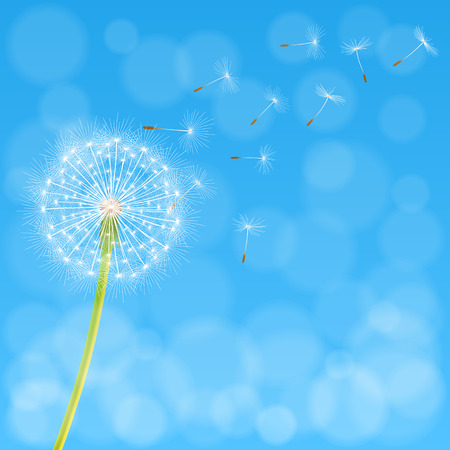 Abstract spring background with dandelion flower and seeds, vector illustration.