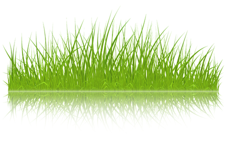 High quality green grass with reflection on white background, vector illustration.