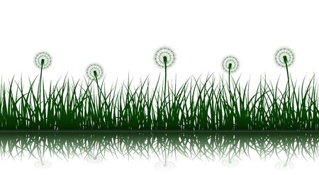 Green grass silhouettes with dandelion flowers and reflection on white background, seamless vector illustration. Illustration