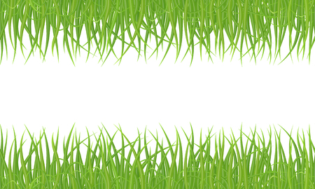 High quality green grass seamless border on white background, vector illustration.