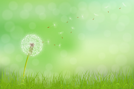 Abstract spring  background with dandelion flower and grass, vector illustration. Illustration