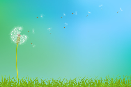 Abstract spring  background with dandelion flowers and grass, vector illustration.