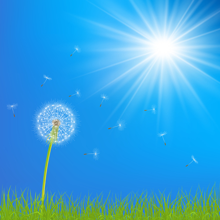 Abstract spring  background with dandelion flowers, seeds and grass, vector illustration.