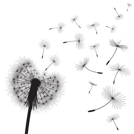 Abstract background with silhouette dandelion flower and seeds, vector illustration. Çizim