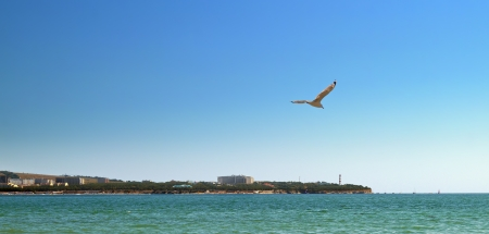 Seagull flying over bay in the early evening