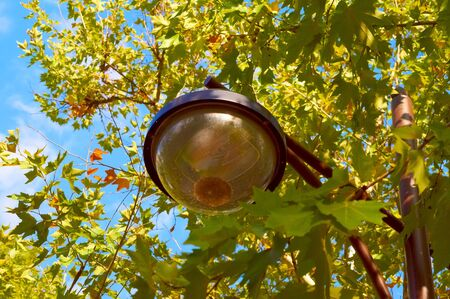 Park lantern surrounded with green and yellow leaves                               photo