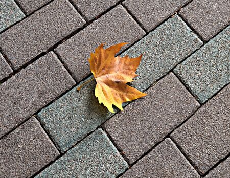 Lonely yellow maple leaf  on paving in autumn Stock Photo